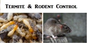 Temite & Rodent Control